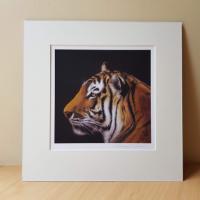 Tiger Signed mounted print by Alanda Calmus