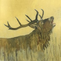 The King of Cairngorms