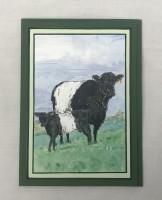 Beltie & calf 5x7 greetings card