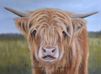Young Highland Cow 12x16in Signed Mounted Print by Alanda Calmus