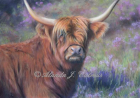 Highland Cow in the Heather Limited Edition Signed Mounted Print by Alanda Calmus